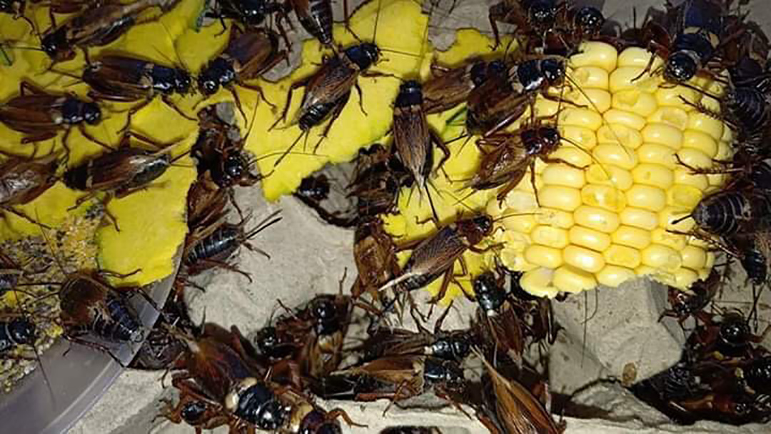 Insect Farming and Production