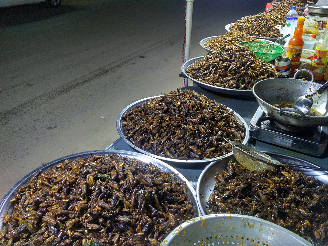 Insects For Food and Feed
