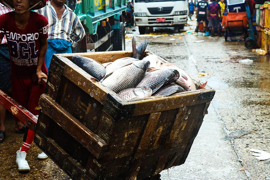 Aquaculture Feed Sector
