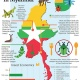 NUTRITION BOOSTERS Myanmar's edible insect sector & market